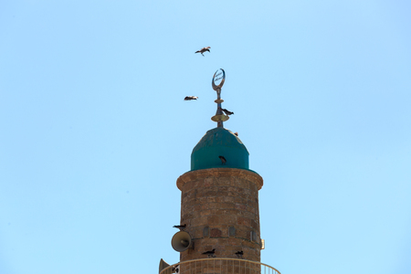 crow: A flock of crows circling above the dome of the minaret