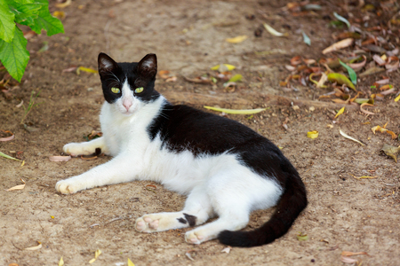 wretched: Black and white cat who is lying on the ground
