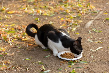wretched: Black and white cat eats cats food