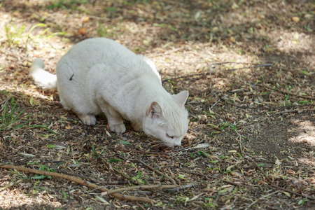 cat eating: Unhappy sick homeless white cat eating from the ground Stock Photo