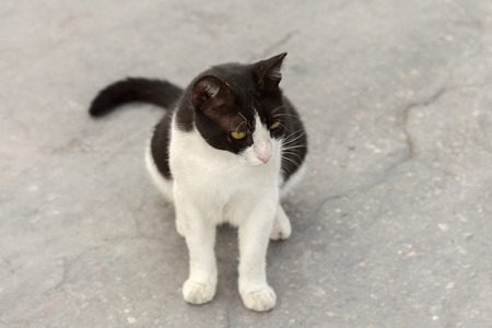 wretched: Simple black and white cat is sitting on asphalt