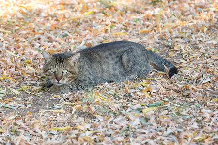 suspiciously: Striped homeless cat looks suspiciously toward the photographer Stock Photo