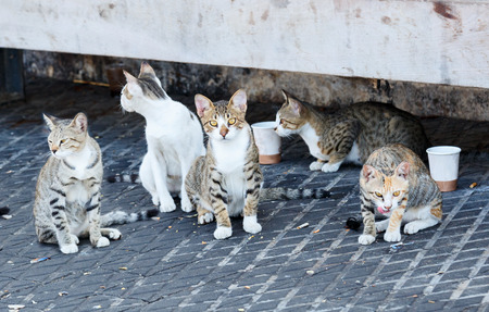 wretched: Group homeless cats under a concrete bench in sea port