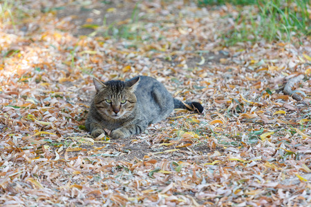wretched: Homeless tabby cat lying looking at photographer