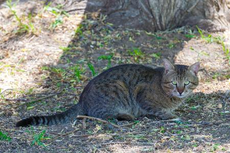 suspiciously: Tabby homeless cat looks suspiciously toward the photographer