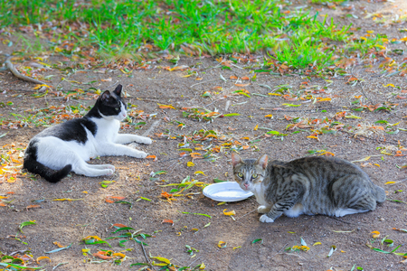 wretched: Two homeless cats near empty plastic plate