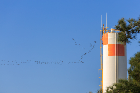 returned: A flock of storks returned from south