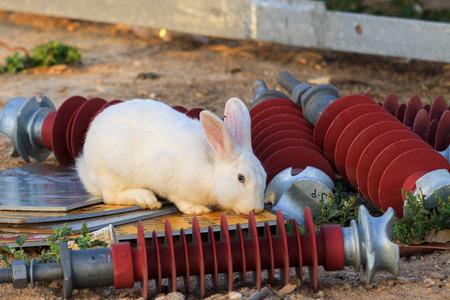 isolator: White rabbit with red isolator