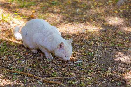ailing: Ailing homeless white cat eating from the ground Stock Photo