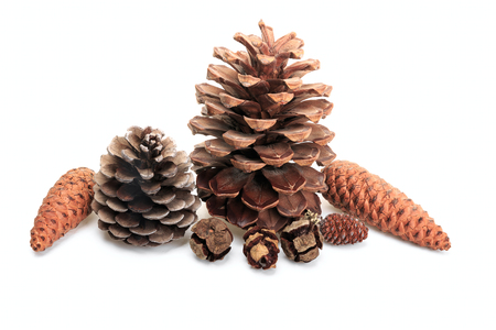 Some different cones isolated on white background
