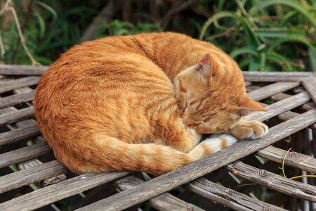 planking: Bright red homeless cat sleeping on old planking at street Stock Photo