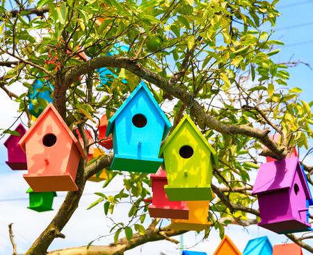 Closeup view birdhouses on a mandarin tree at city