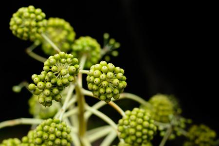 日本の植物のトップ。 写真素材