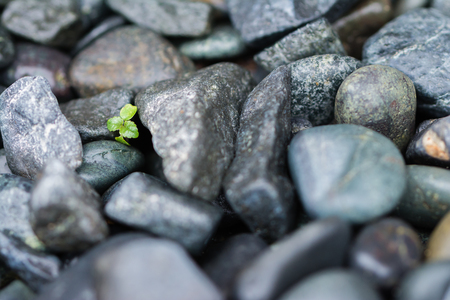 black empowerment: A few leaves from a small green plant growing and pushing through big heavy black rocks.
