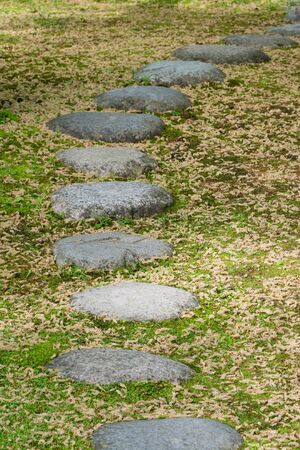 stepping: Stepping stones on grass with many fallen leaves.