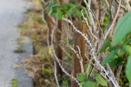 barbed wire fence: Barbed wire fence enclosing an area overgrown with plants.