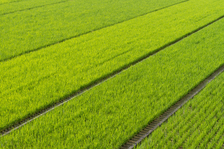vast: A vast stretch of green rice fields in the countryside of Kochi, Japan. Stock Photo