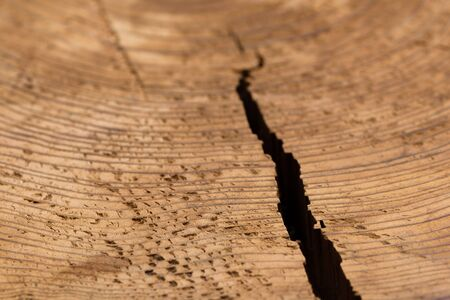 splitting up: A close up shot of the texture and grain in a cut stump of a tree with a crack splitting it open from the side.