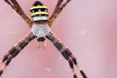 web2: A macro shot of a black and yellow garden spider.