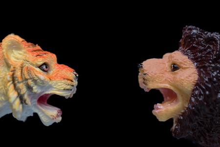 agression: A small toy lion face to face with a small toy lion with strong aggressive expressions ioslated on a black background.