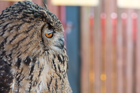 A profile of an owl that looks snobby or stuck-up.