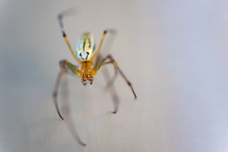 arachnids: A macro shot of a very small brown and yellow spider.
