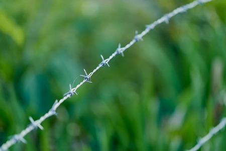 A line of barbed wire with one barb in sharp focus while the rest are blurred out artistically with green grass in the background.