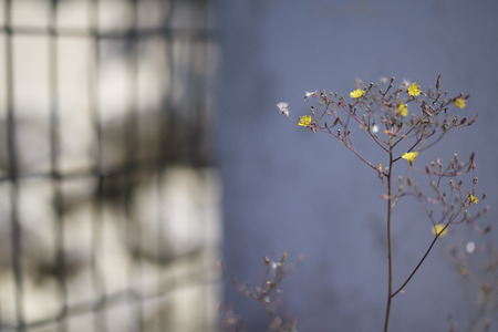 Very small yellow and white flowers shot with a shallow depth of field for subject isolation and an artistic look. 版權商用圖片
