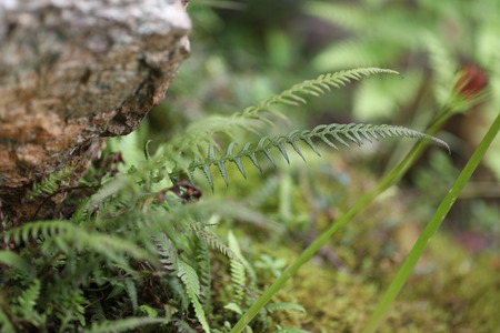 An abstract shot of some green plants including a fern growing out from underneath a rock.