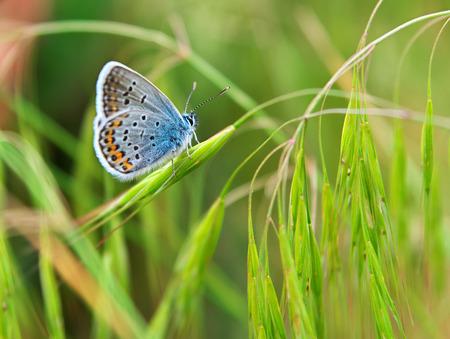 season specific: Colorful moth and grass. Season specific.