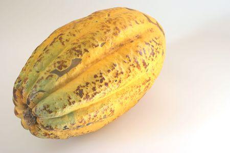 materia prima: Frutto maturo di cacao close-up. Cioccolato materie prime
