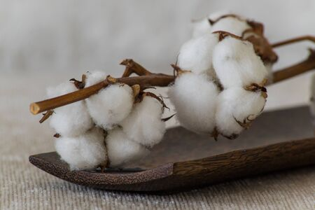 cotton flowers on wooden plate