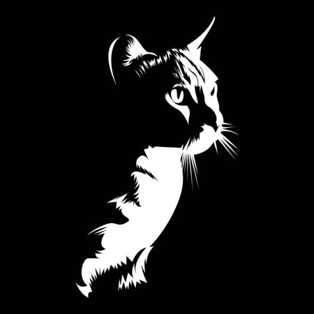 silhouette of cat on black darkness background vector illustration