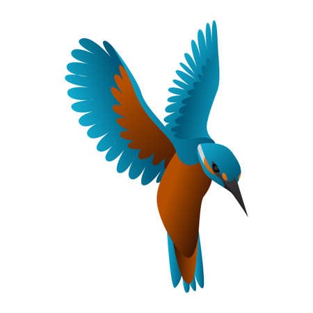 gradient kingfisher bird vector illustration isolated on white background