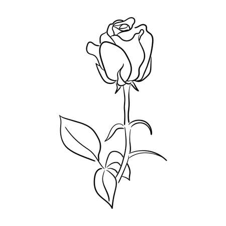 simple hand drawn line art rose flower vector illustration suitable for decoration and logo template Logos