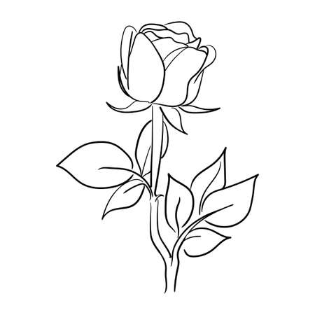 simple hand drawn line art rose flower vector illustration suitable for decoration and logo template