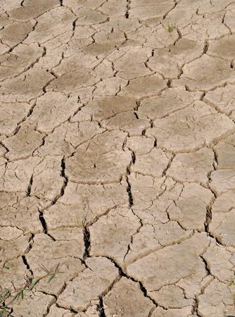 dried cracked land photo