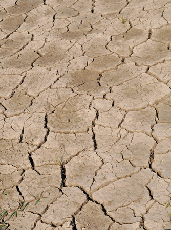 dried cracked land
