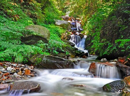 waterfall in a dense forest Stock Photo - 16571125