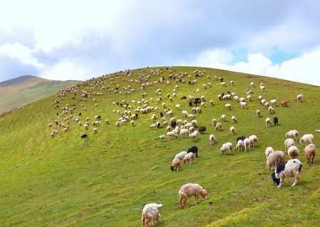 sheep grazing on vast mountain slope