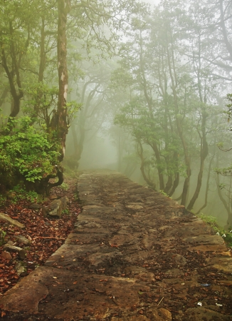 a trail in misty forest