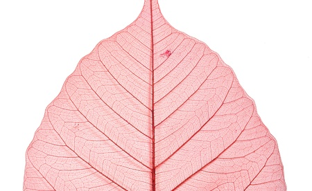dried leaf texture on white  Stock Photo - 16654720