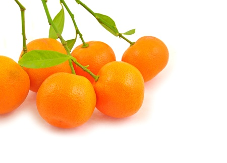 close up of ornamental little oranges Stock Photo - 16857615
