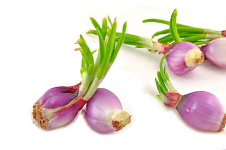 close up of germinated onion arranged on white  Stock Photo - 16857457