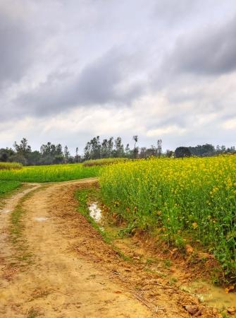 yielding: road through mustard farms in rural India Stock Photo