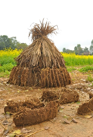 cow dung cake heap in rural India