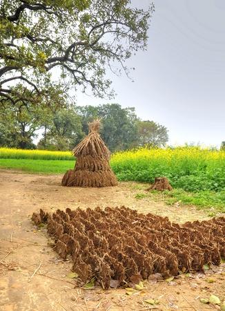 excreta: cow dung cake heap in rural India