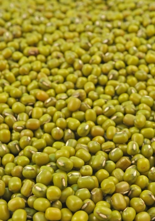 munggo: whole seeds of green gram