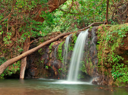 waterfall in dense forest Stock Photo - 16877387