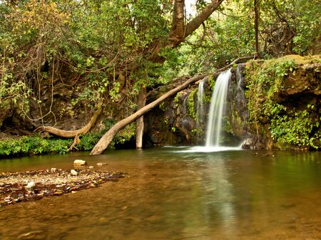 wide shot of dense forest with waterfall with three streams Stock Photo - 16877382